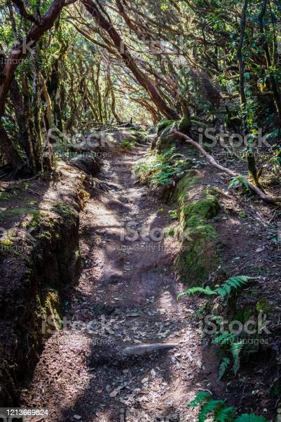 Photo of Footpath through forest
