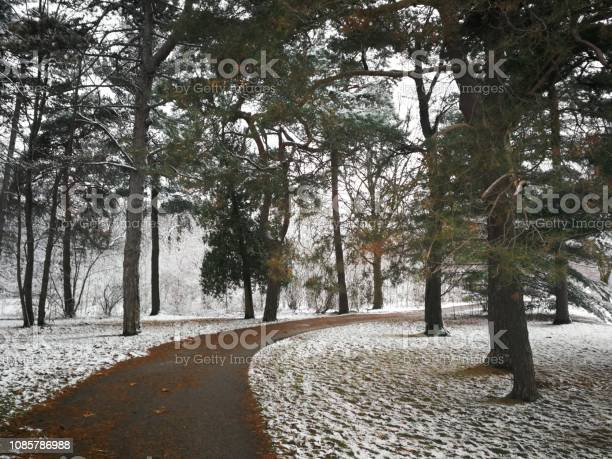 Photo of Footpath through forest with snow dusting
