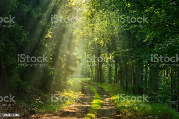 Photo of Footpath through Green Forest illuminated by Sunbeams through Fog