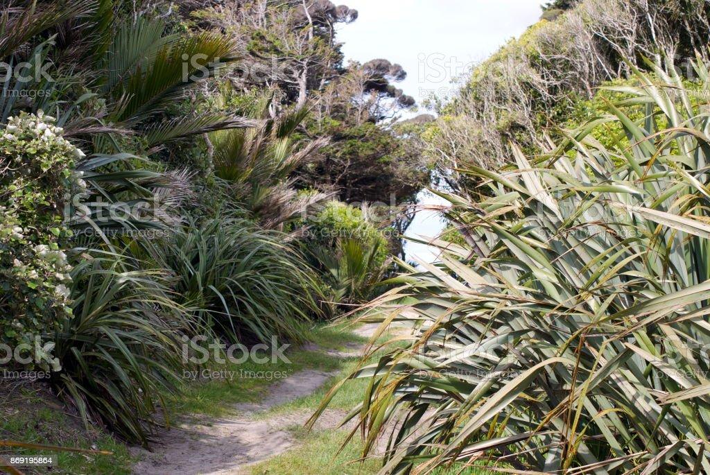 Footpath through Native New Zealand Flora stock photo