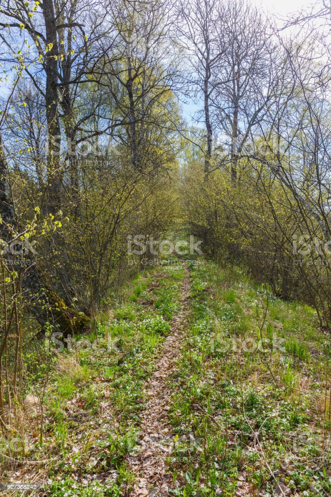 Footpath through the deciduous forest with lush trees in the spring - Royalty-free Beauty In Nature Stock Photo