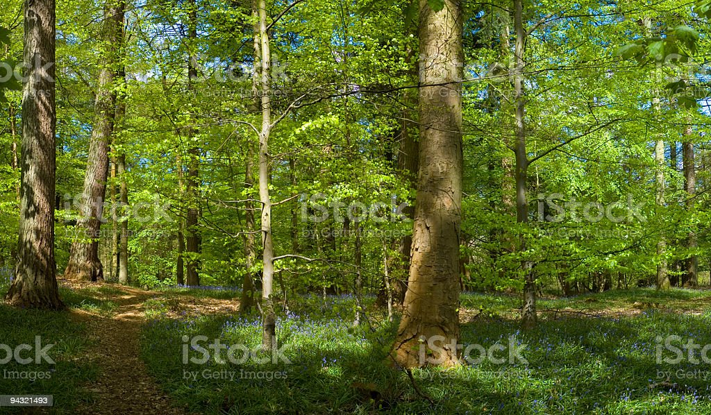 Footpath through the forest royalty-free stock photo