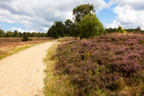Footpath through the Luneberg Heath