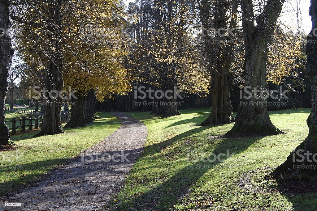 Footpath through woodland. West Sussex, England royalty-free stock photo