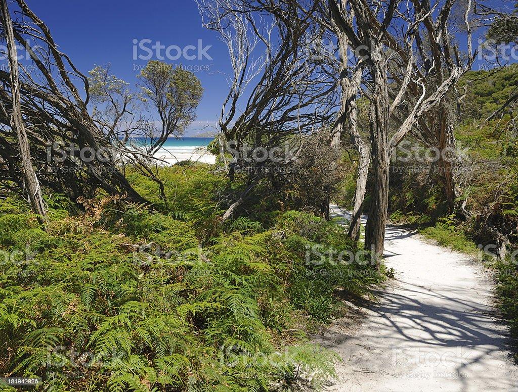 Footpath to Squeeky Beach, Wilson Promontory, Australia (XXXL) stock photo