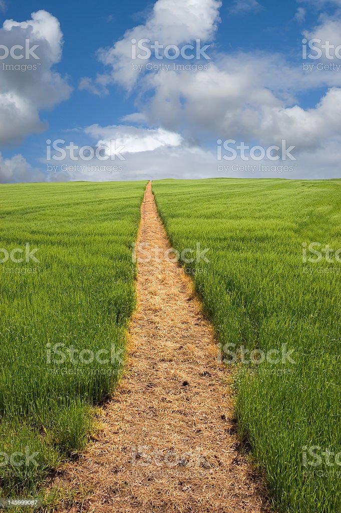 Footpath to the Horizon stock photo