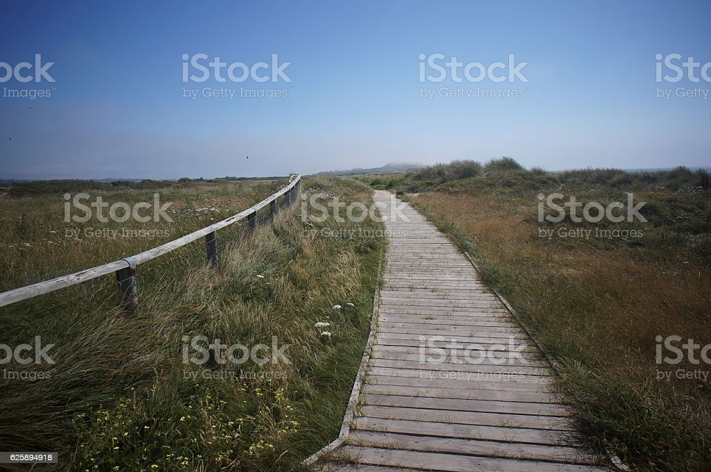 Footpath to the meadow stock photo