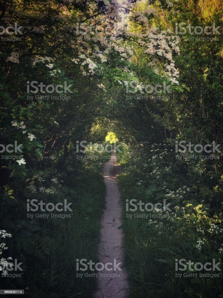 Voetpad onder de prachtige boom luifel op het platteland van Oxfordshire, Engeland - Royalty-free Absentie Stockfoto