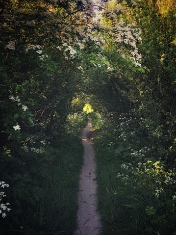 Voetpad Onder De Prachtige Boom Luifel Op Het Platteland Van Oxfordshire Engeland Stockfoto en meer beelden van Absentie
