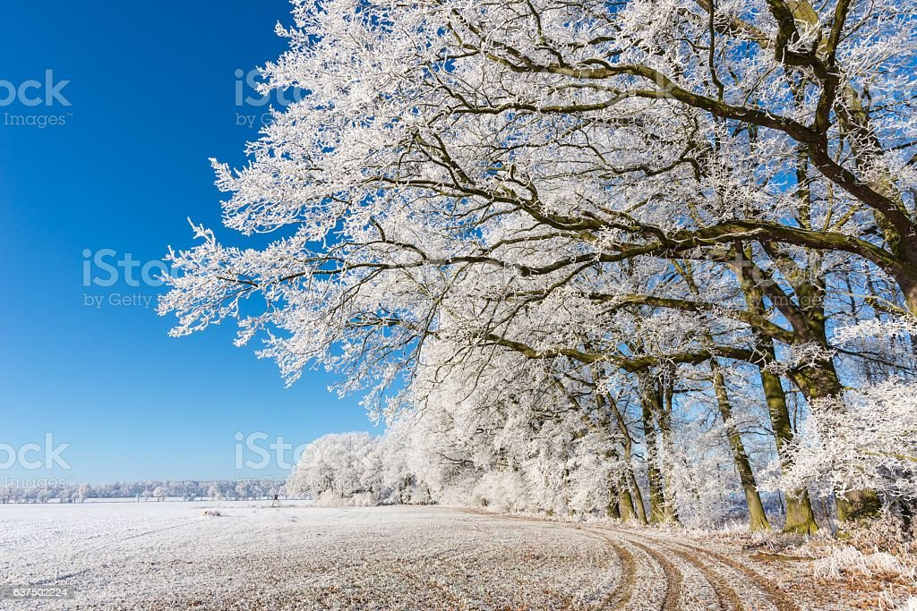 Footpath under branches covered by frost stock photo