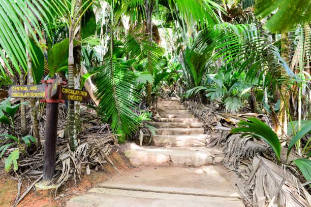 Footpath Vallée de Mai Nature Reserve, Praslin Island, Seychelles, Indian Ocean, Africa stock photo