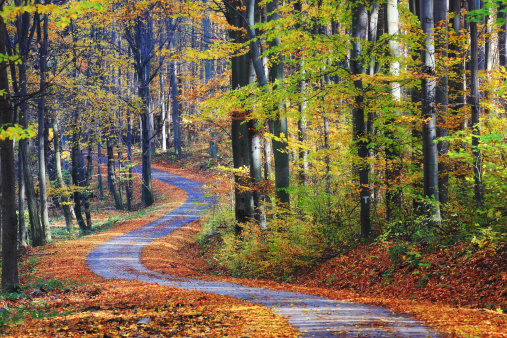 Footpath Winding Through Colorful Forest Stock Photo - Download Image Now