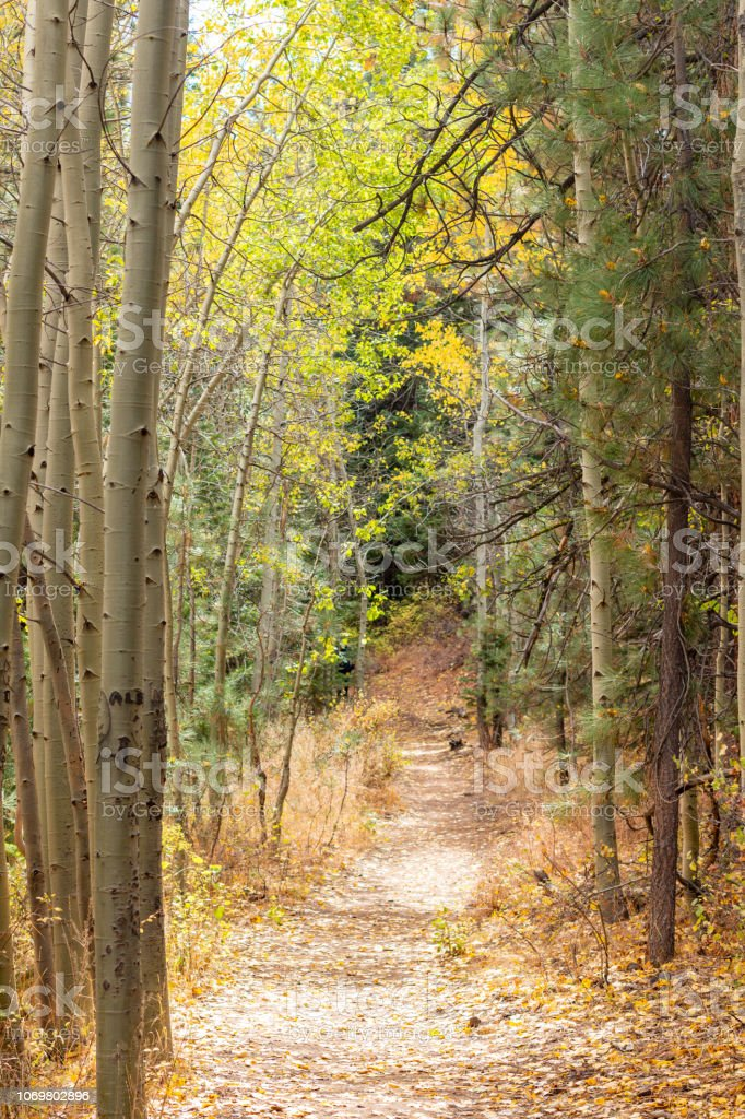 Footpath with Fall colors in the high sierra stock photo