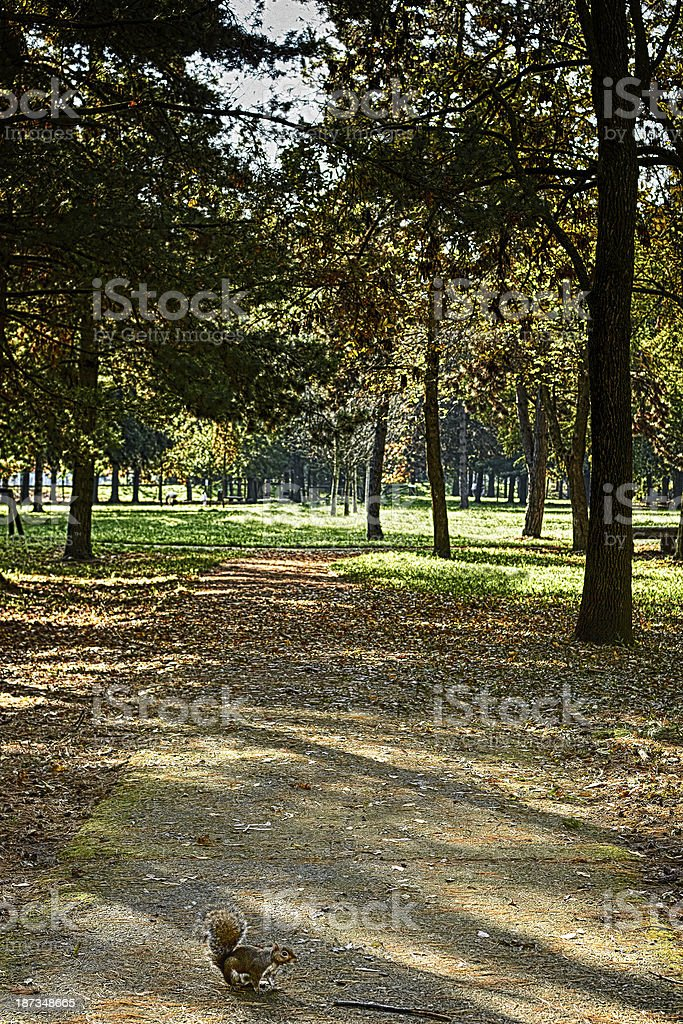Footpath with squirrel. Color Image royalty-free stock photo