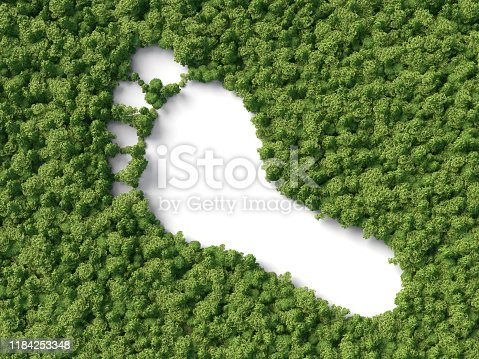 footprint shape in the 3d forest