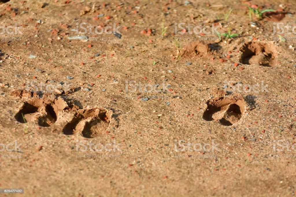 Footprint stock photo