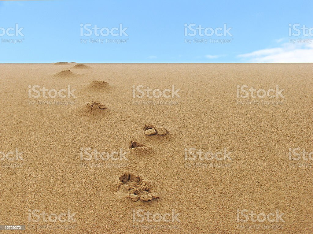 Footprints Going Down a Sand Dune royalty-free stock photo