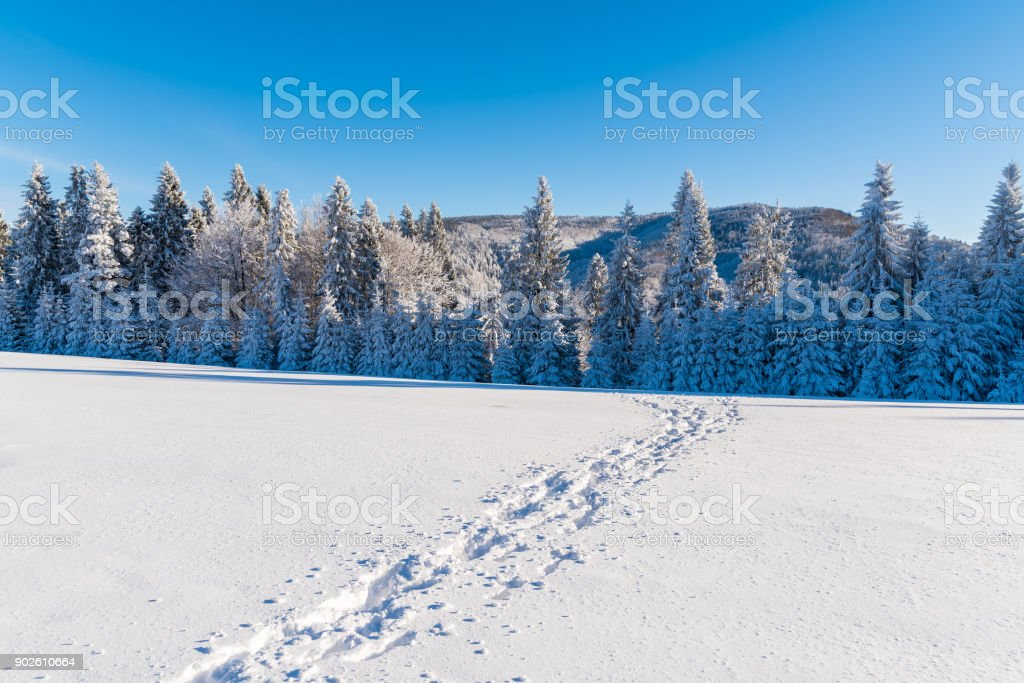 Footprints in snow in Beskid Sadecki Mountains in winter time, Poland stock photo