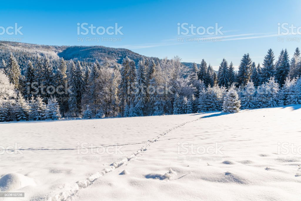 Footprints in snow in winter landscape of Beskid Sadecki Mountains on sunny day, Poland stock photo