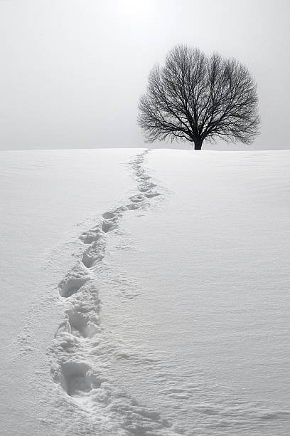 Footprints in Snow Leading to Tree stock photo