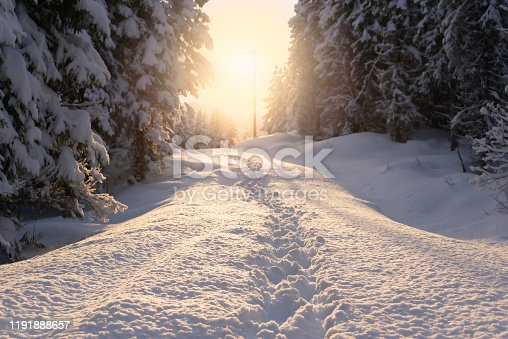 Low perspective on foot prints in snow. Pathway between fir trees with low sun shining in the middle. Winter scenery.