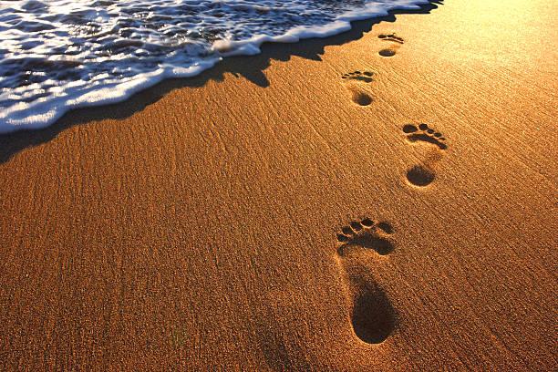 footprints in the beach sand - fußspuren stock-fotos und bilder