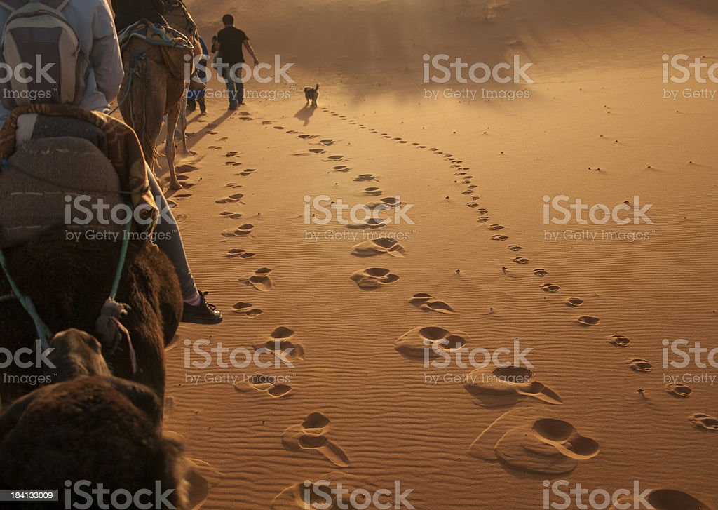Footprints in the desert of men and dog beside camels stock photo