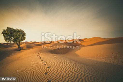 footprints and lonely tree in the desert of oman.