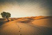 istock footprints in the desert 924450410