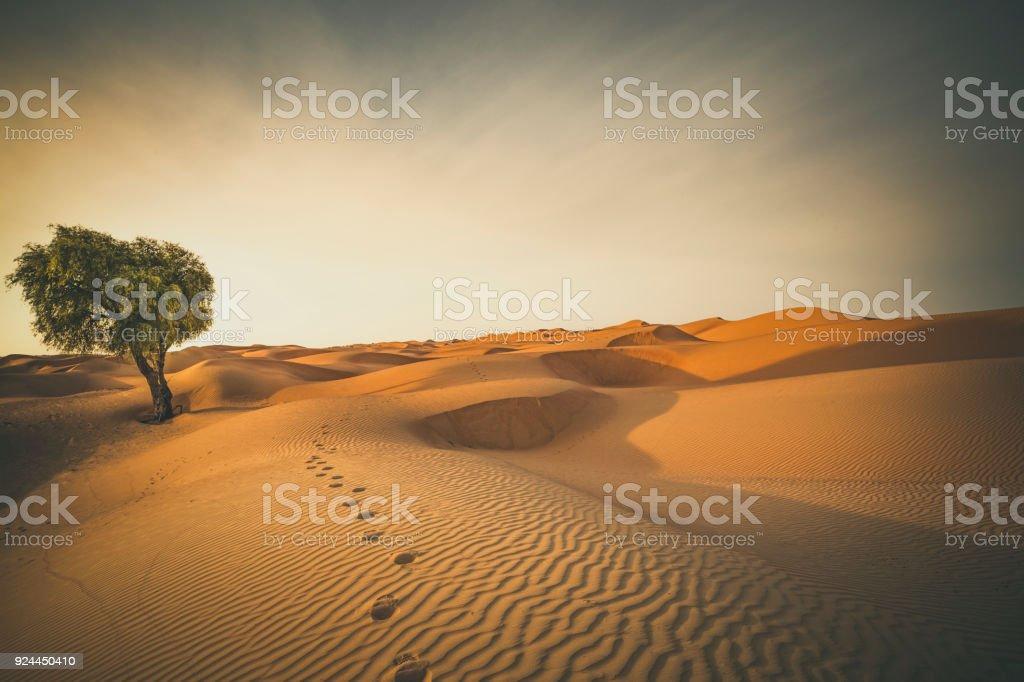 Pegadas no deserto - foto de acervo