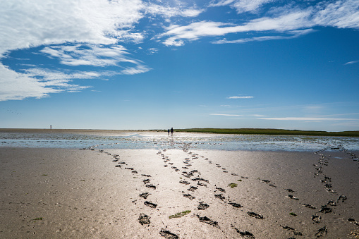 Footprints in the mudflats