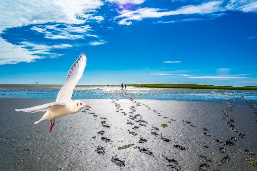 Footprints in the North Sea Watt