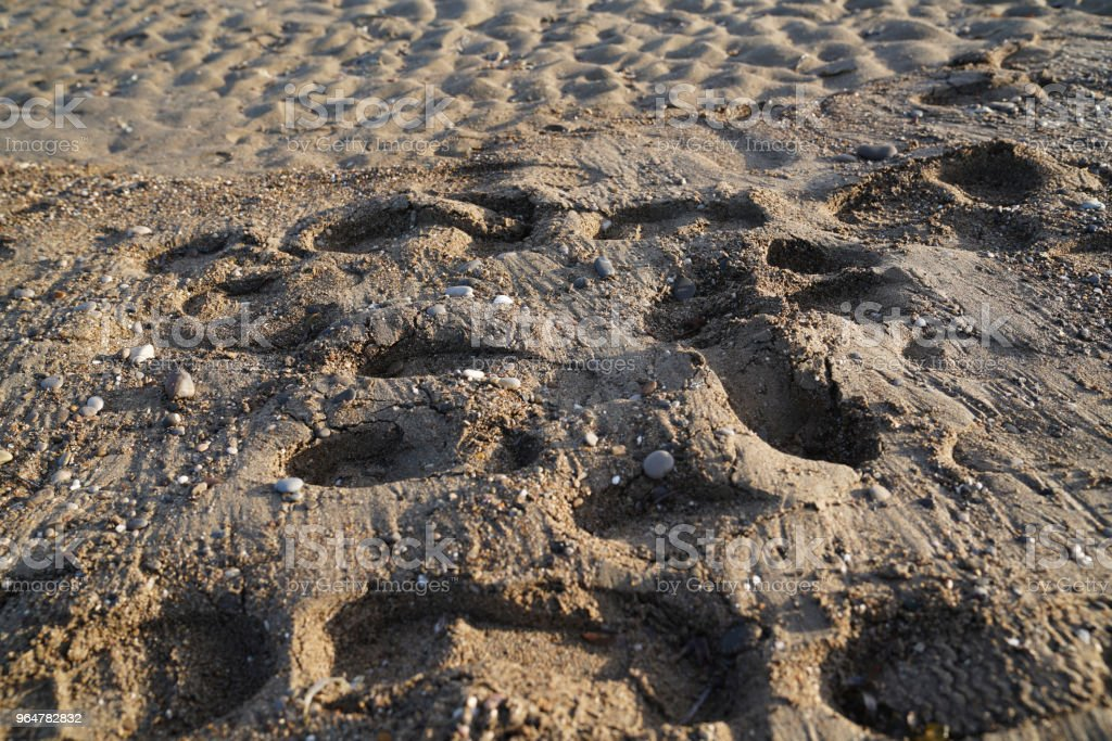 Footprints in the sand of the beach royalty-free stock photo