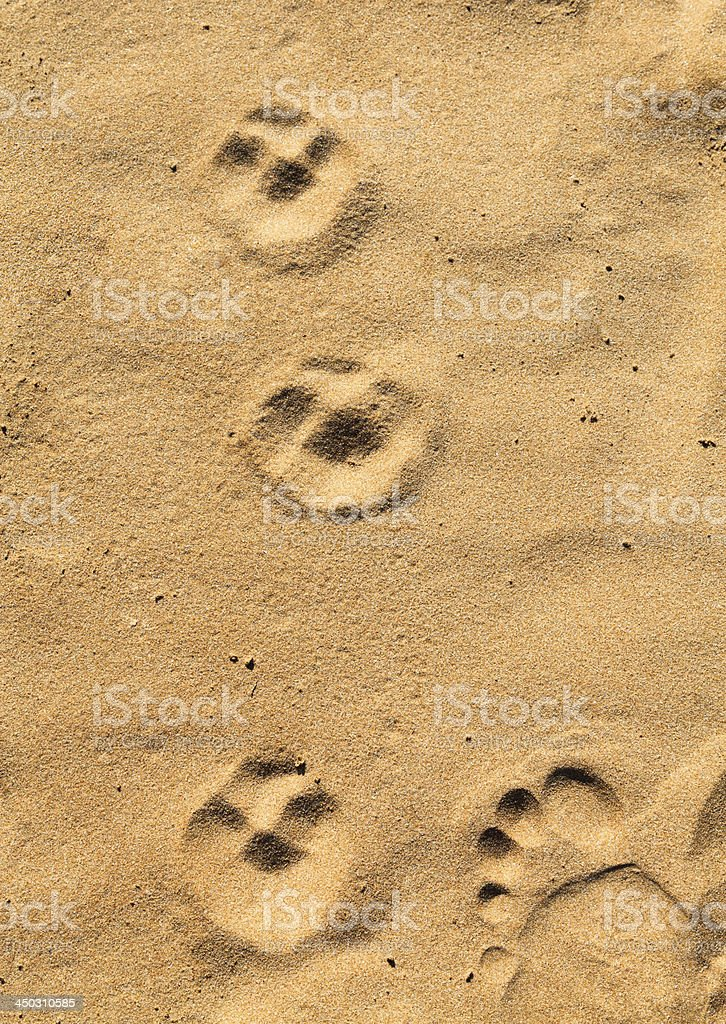 Footprints in the sand. stock photo