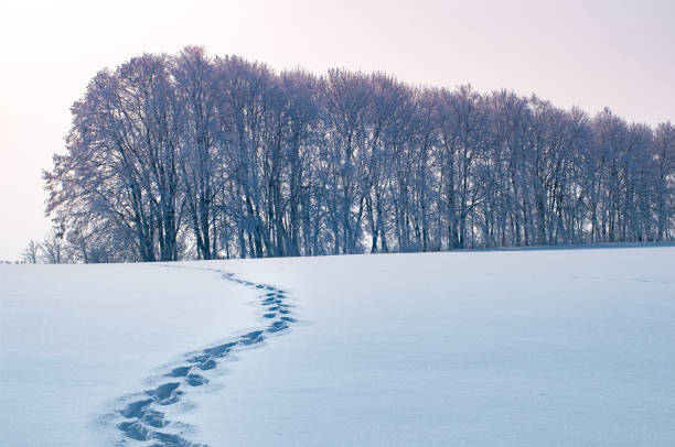 footprints in the snow of a man left in the distance. Concept or landscape of a cold winter morning stock photo