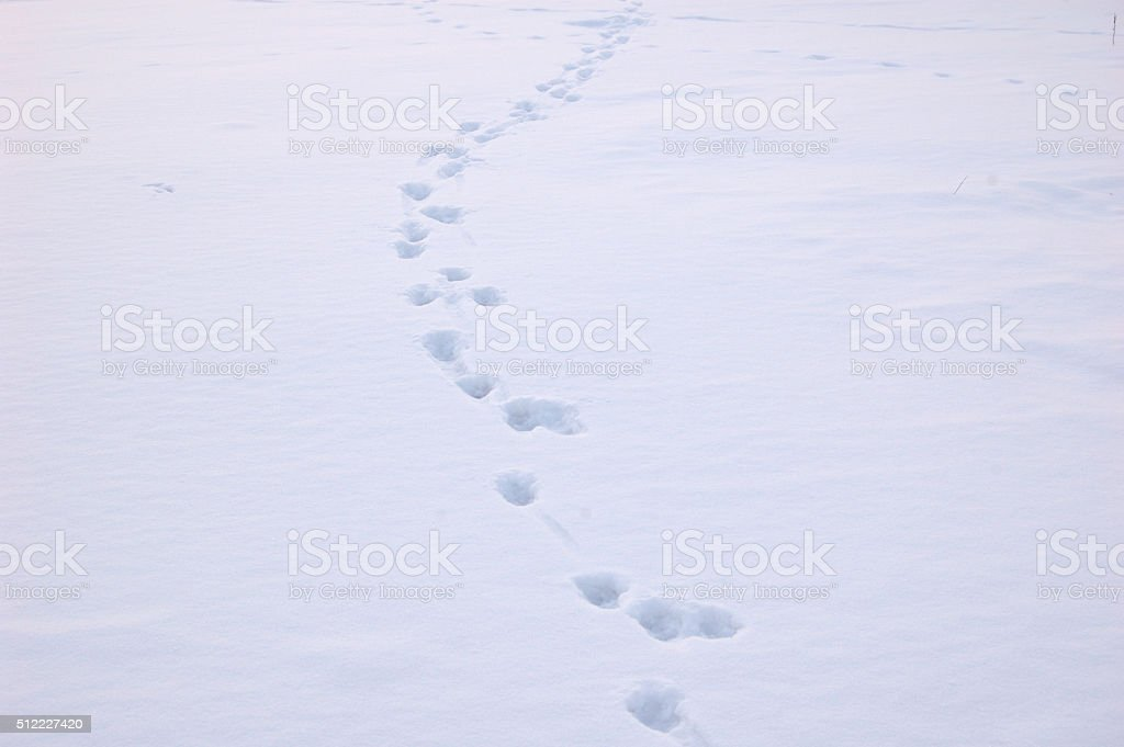 footprints in the snow stock photo