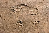 Strand mit Wellenmuster bei Ebbe und Fußspuren