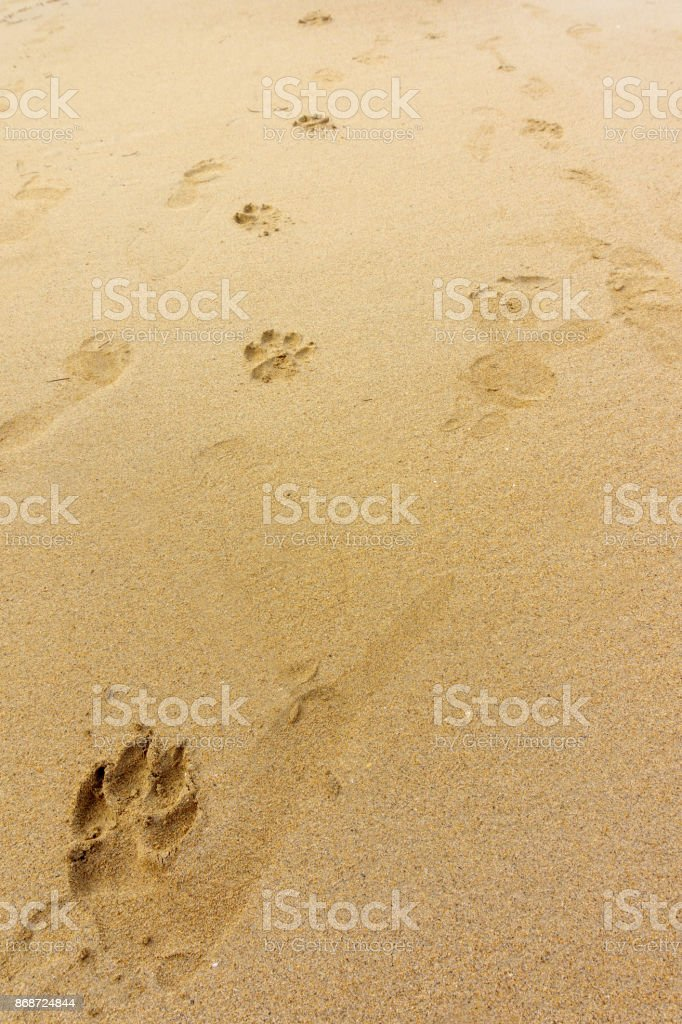 footprints of dog paws on the sand stock photo