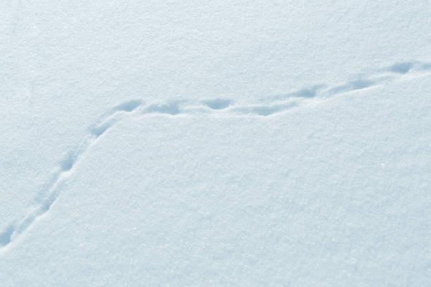 spuren der kleinen tiere im schnee - suche katze stock-fotos und bilder