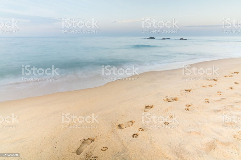 Footprints of Man and Dog on the Sand in Hikkaduwa stock photo