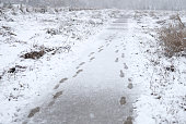 Walking the trail in the wetlands during light snowfall in winter.