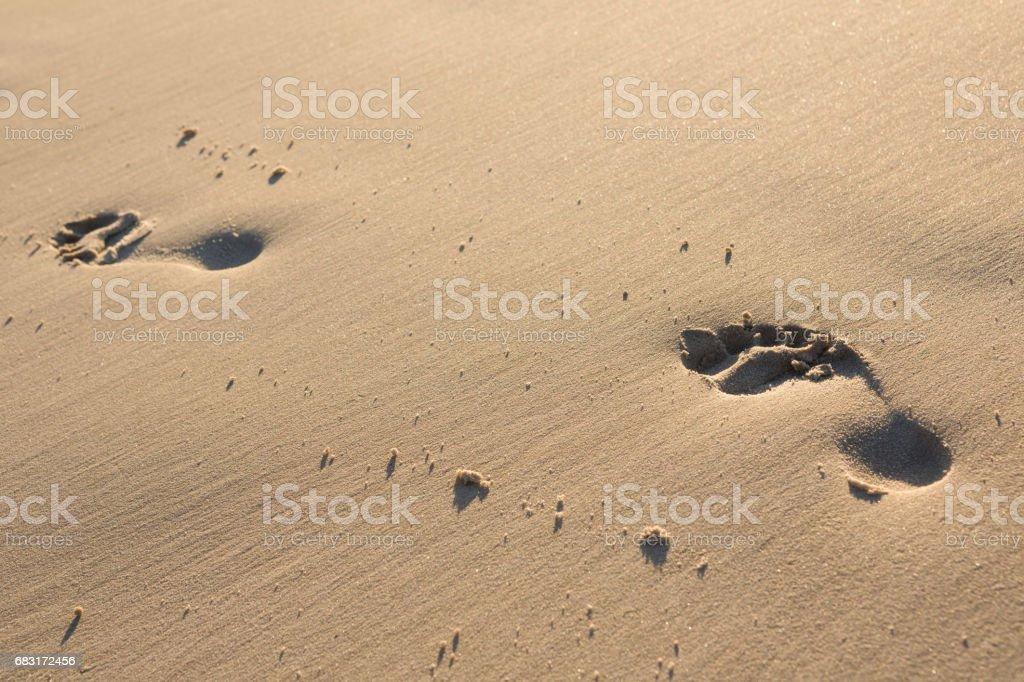 모래 해변에서 접지면 royalty-free 스톡 사진