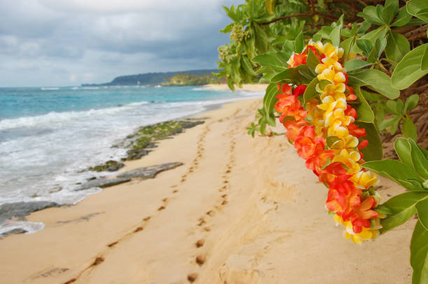 footprints on secluded oahu beach late afternoon - hawaiian flowers stock photos and pictures