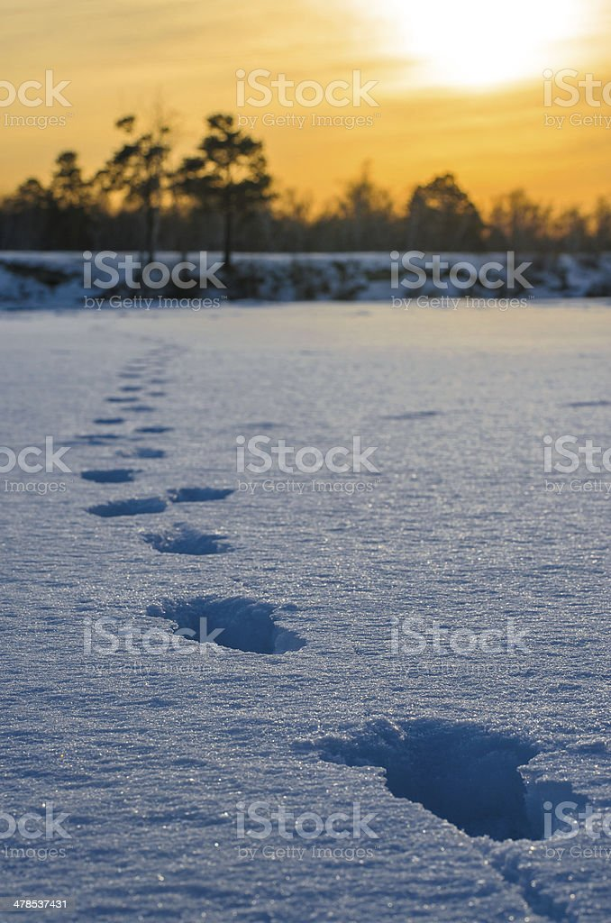 Footprints on snow. royalty-free stock photo