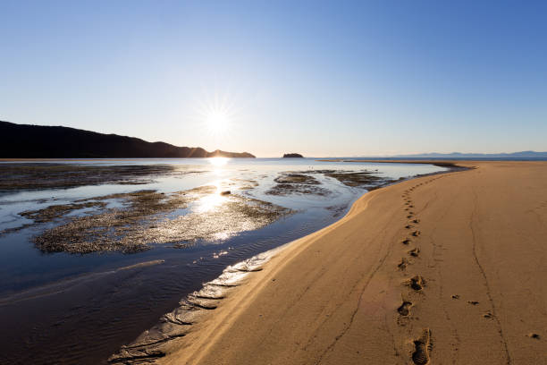 Footprints on the Sandbars at Low Tide in New Zealand stock photo