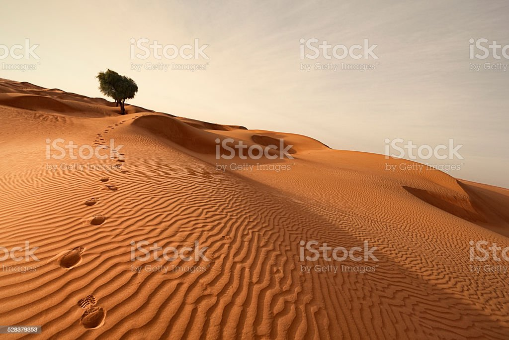 footprints out of the desert stock photo