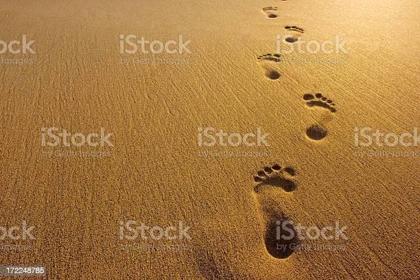 Footprints picture id172248785?b=1&k=6&m=172248785&s=612x612&h=xk4d5biqyfxtooc2sbvrqwiito1zvapyr9cj9ev7nog=