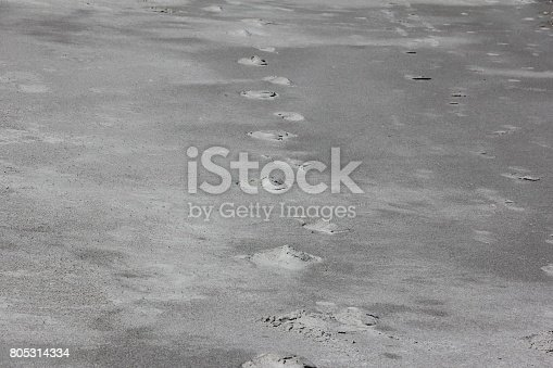 974677018istockphoto Footprints, Tracks in the Sand of Cocoa Beach, Florida, USA 805314334