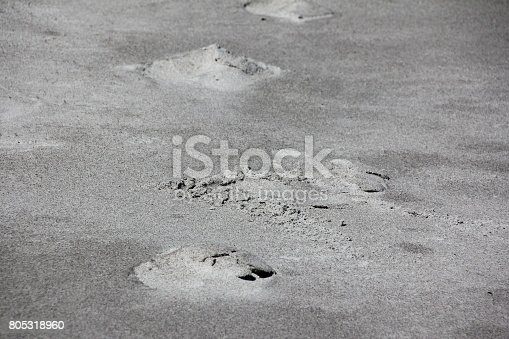 974677018istockphoto Footprints, Tracks in the Sand of Cocoa Beach, Florida, USA 805318960