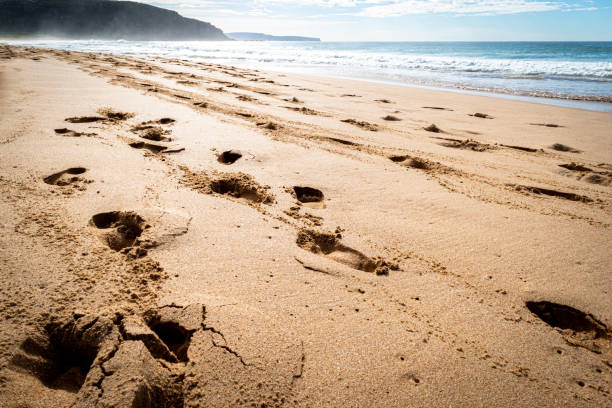 Footprints_track_on_beach_mist stock photo